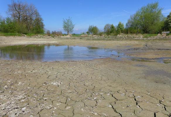 Solche zeitweise Wasser führenden, kahlen Gewässer sind optimal. © Manfred Steffen