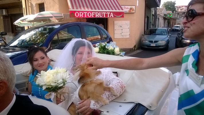 wedding-dog-sitter-sicilia