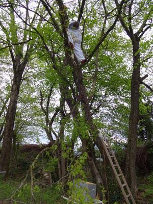 Descente d'une branche avec essaim