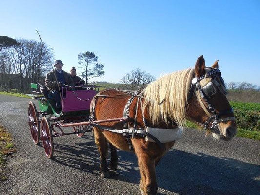 Trait-Lourd Calèches Horse-drawn carriage rides Aubous (Vic-Bilh / Madiran)