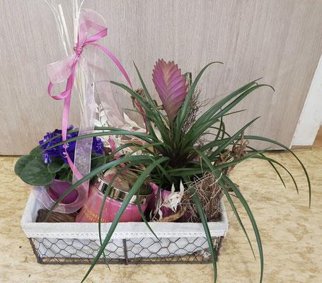 Nr. 2 Pflanzen Arrangement mit großer 3 Dochtkerze (Duft - Passionsfrucht Prosecco) ab 40€ im Verkauf erhältlich
