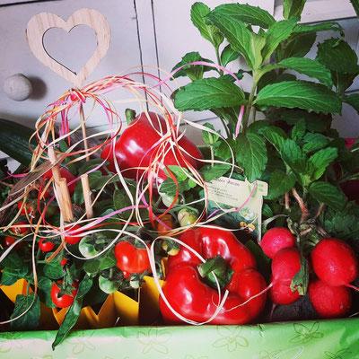 Gemüse Präsentkorb variabel auch mit Gemüse oder Schokolade oder anderen Präsenten, mit Vorbestellung