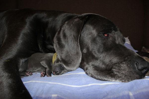 kleine gelbe Maus versteckt sich unter Mamas Ohr :D