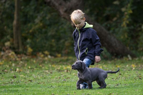 der kleine Jonte bringt Bommel das Spazieren gehen bei