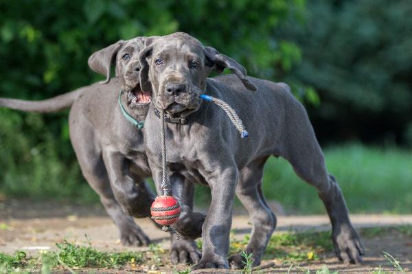 gib mir meinen Ball! SOFORT!!!!!