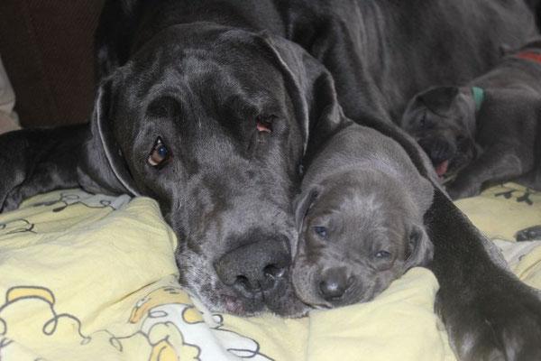 süße lila Hündin kuschelt mit Mama