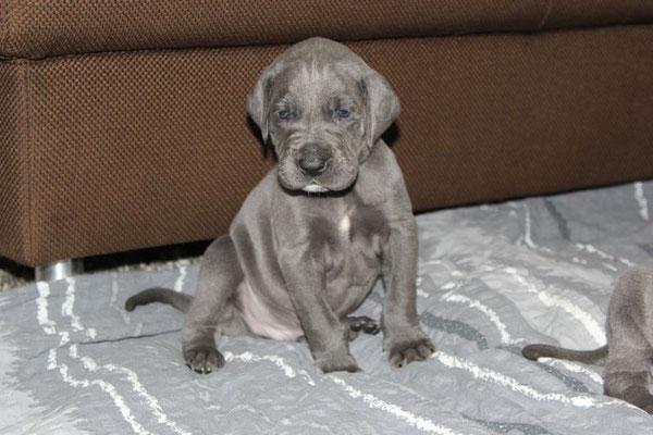 süßer kleiner Schatz Azrael (genannt Atze) freut sich schon auf sein neues zu Hause!!!! Er wird bald zu Rebecca und Torsten nach Pinnow ziehen!! Da freue ich mich sehr drüber!!!!