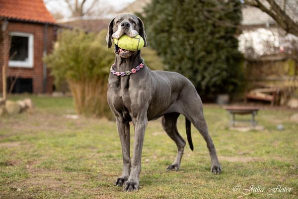 Mein Ball nimmt mir niemand weg!!