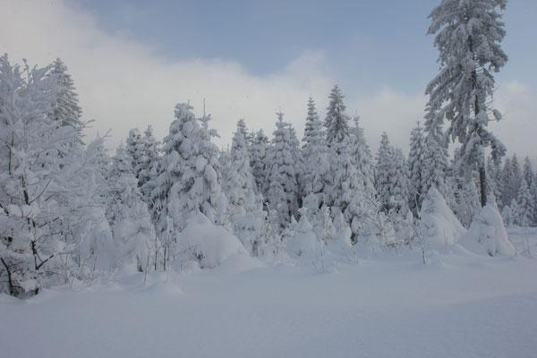 Winterwald am Langlaufzentrum