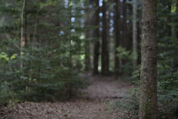 Rohbild aus der Kamera, unbearbeitet, Wald in Bad Endorf