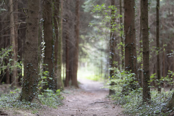 Rohbild aus der Kamera, unbearbeitet, Wald in Bad Endorf, Bayern