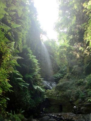 Wasserfall, Lorbeerwald Los Tilos