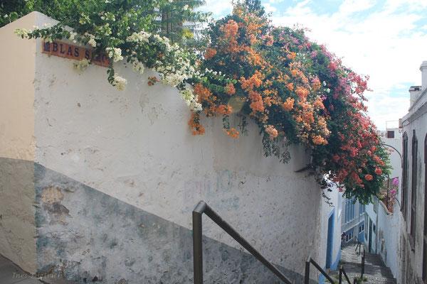 Calle Blas Simon