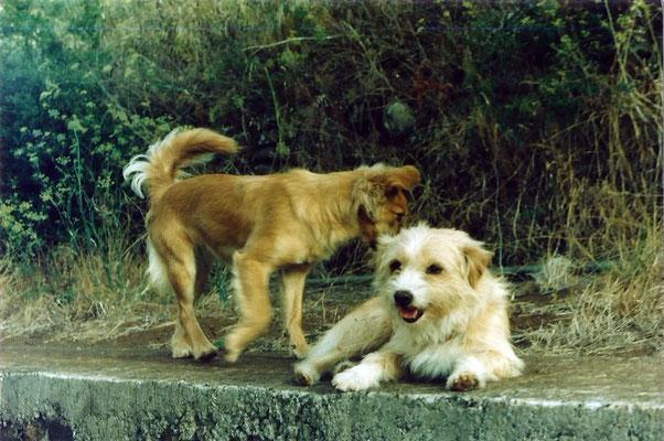 Susi und Estrella