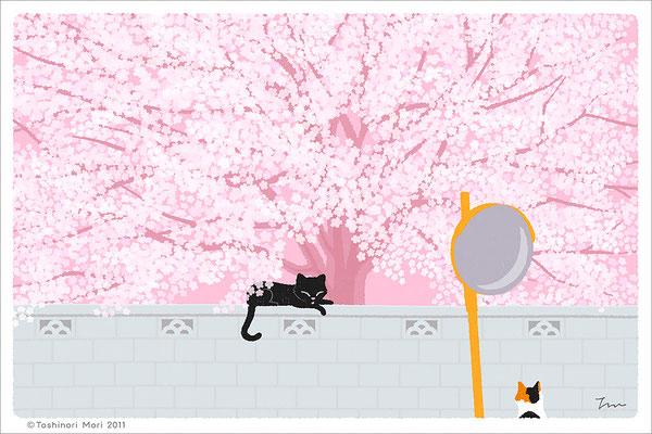 たびねこイラスト-4 桜の樹の下で
