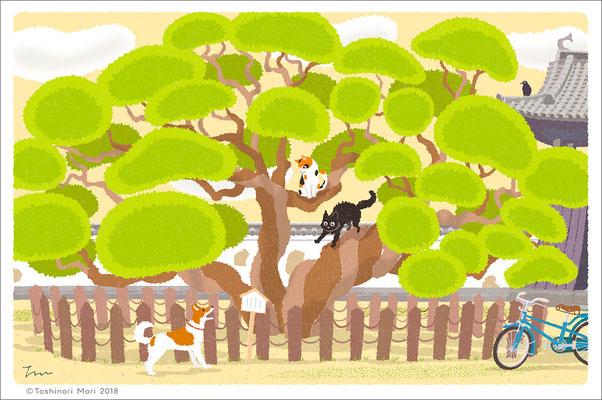 たびねこイラスト-27 まんじゅの木の上で