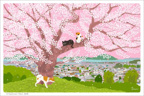 たびねこイラスト-49 丘の上の桜
