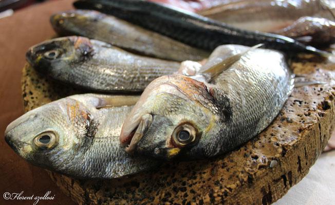 poisson de la méditerranée