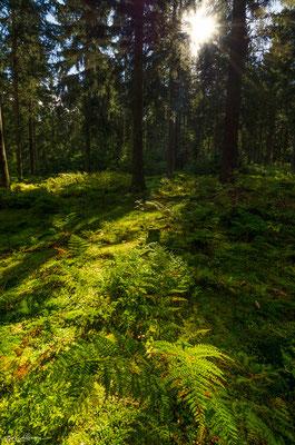 "Hiking trail ""Liebesbankweg"" at the bocksberg"
