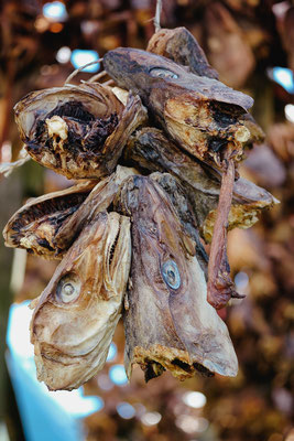 Dried fish(heads)