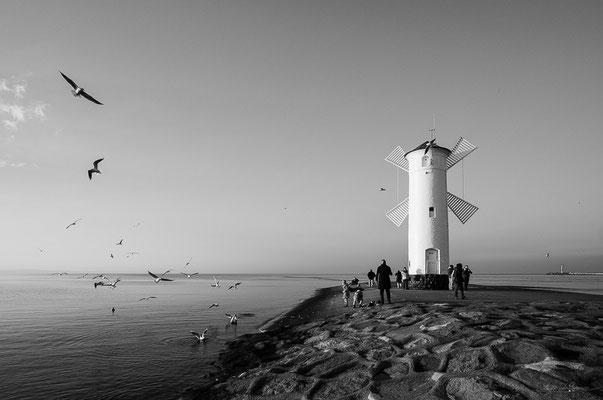 Seagulls - Swinoujscie, Poland