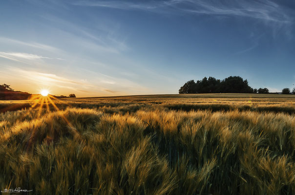 """Sunset Fields"" - South of Hamburg, Germany"