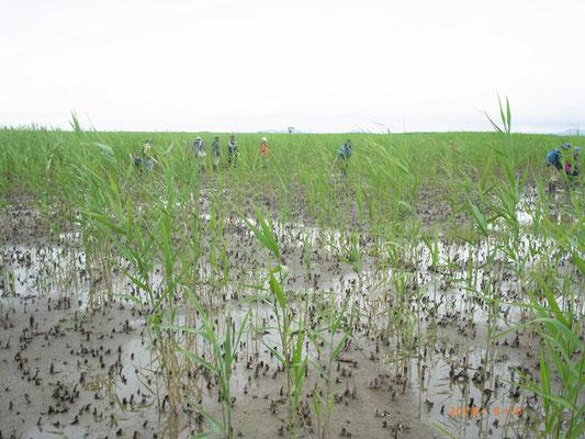 浅く掘削された新しい湿地