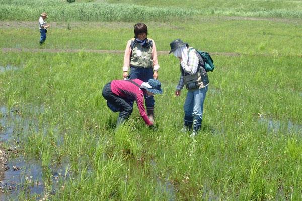 掘削でできた新しい湿地の調査