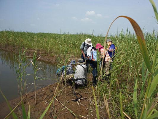 昨年掘削されてできた新しい池での調査の様子