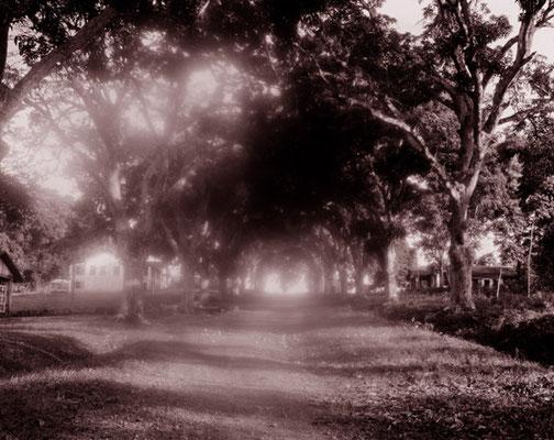 Fordlândia, Bundesstaat Pará Der Ford-Konzern wollte 1928 am Rio Tapajós Kautschuk für seine Autoreifen anpflanzen und verarbeiten. Der Plan scheiterte, Ford machte 300 Millionen Dollar Verluste und gab 1945 auf. Geblieben sind die Ruinen von Fordlândia –