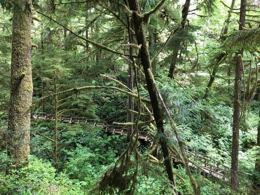 Wir wissen jetzt alles über die Sitka spruce, die Hemlock fir und die Red cedar.
