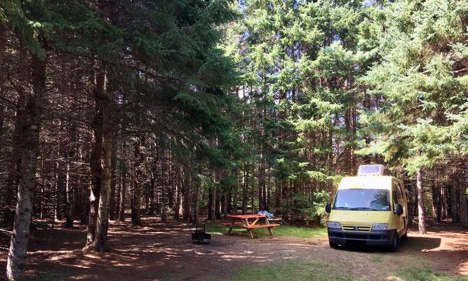 … und wieder eine wundervolle (und ganz andere) Wald-Umgebung auf dem NP-CG Côte-à-Fabien.