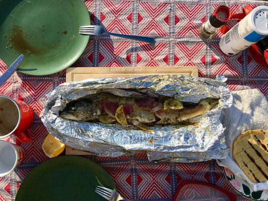 Auf diesem Bild: Das Abendessen, dass der Pelikan gerne gehabt hätte.