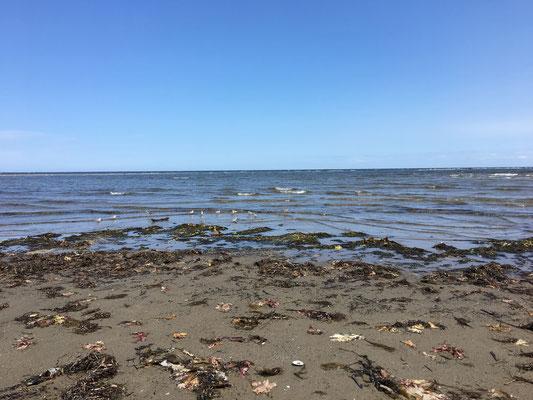 Ausgedehnter Strandspaziergang – diesmal rund um Kellys Beach. Die seltenen Piping Plovers (der gemeine Gelbfuß-Regenpfeifer) wollten leider nicht näher für's Foto posieren.