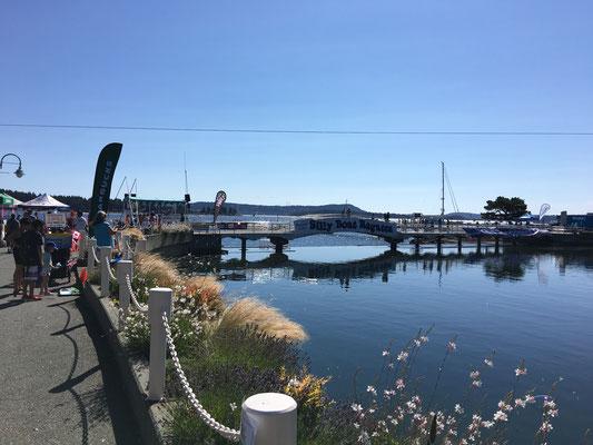 """Ein Highlight des Sommers: Die """"Silly Boat Regatta"""" (das berühmte Badewannen-Rennen verpassen wir leider)."""