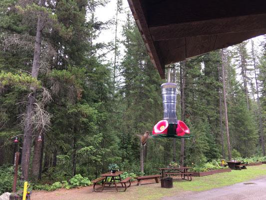 Die hiesige Besonderheit: Kolibris!