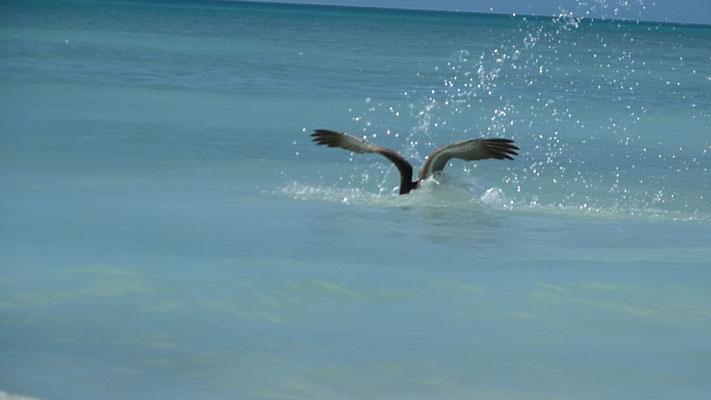 und beim Fische fangen kopfüber ins Wasser