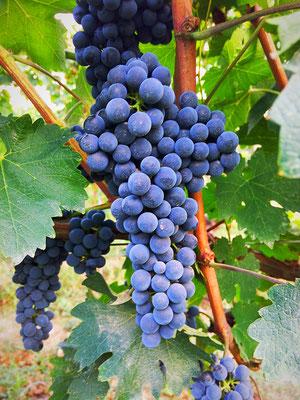 Toscana, San Miniato Agrisole. Etesiaca itinerari di vino blog