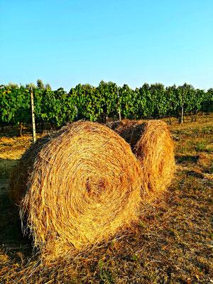 Quercialuce toscana blog Etesiaca itinerari di vino