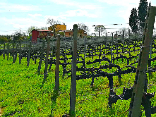 vinix beconcini Etesiaca itinerari di vino blog