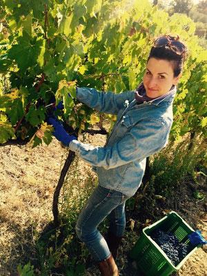 Montalcino. Agricola Tamburini. Etesiaca. Itinerari di vino