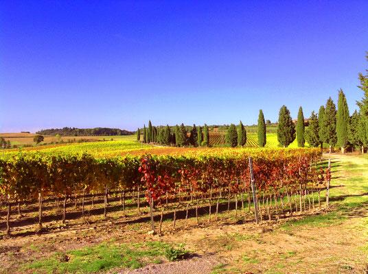 Marco Capitoni, Vinitaly 2018. Etesiaca itinerari di vino blog