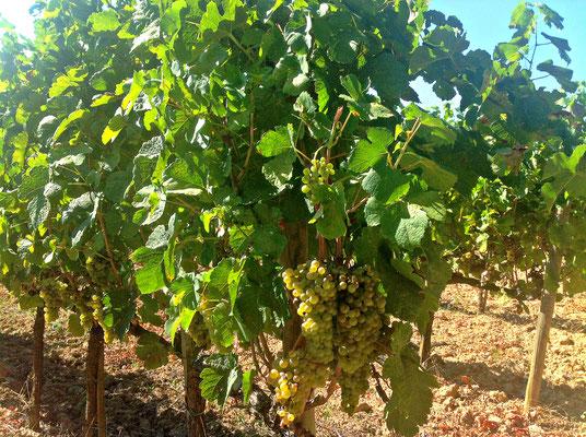 Poggio Grande Val d'Orcia Unesco. Itinerari di vino. Foto Blog Etesiaca