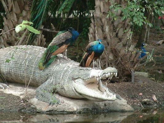 Phuket - Zoo -