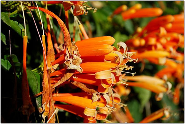 Pai - Flowers