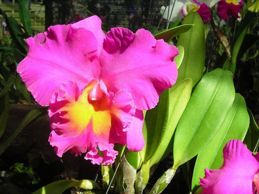 Suan Phueng District - Orchid Farm -