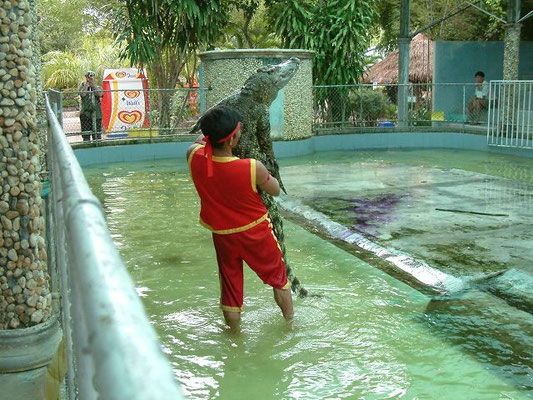 Crocodile Show - Phuket - Zoo -