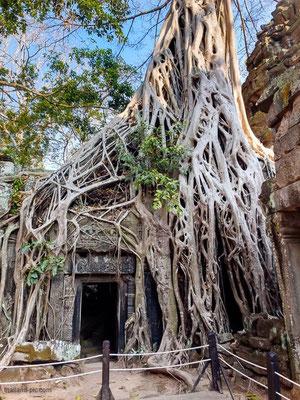 Angkor - Siem Reap - Cambodia