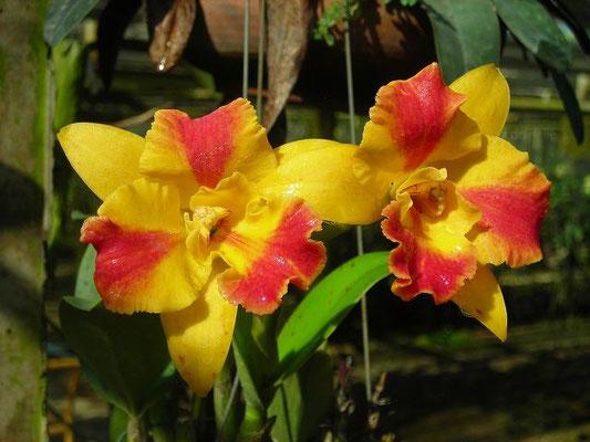 Suan Phueng District - Orchid Farm -