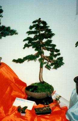 Ottobre 1997, Segusino